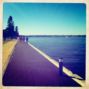Keeping on the lookout for Perth's famous black swans.